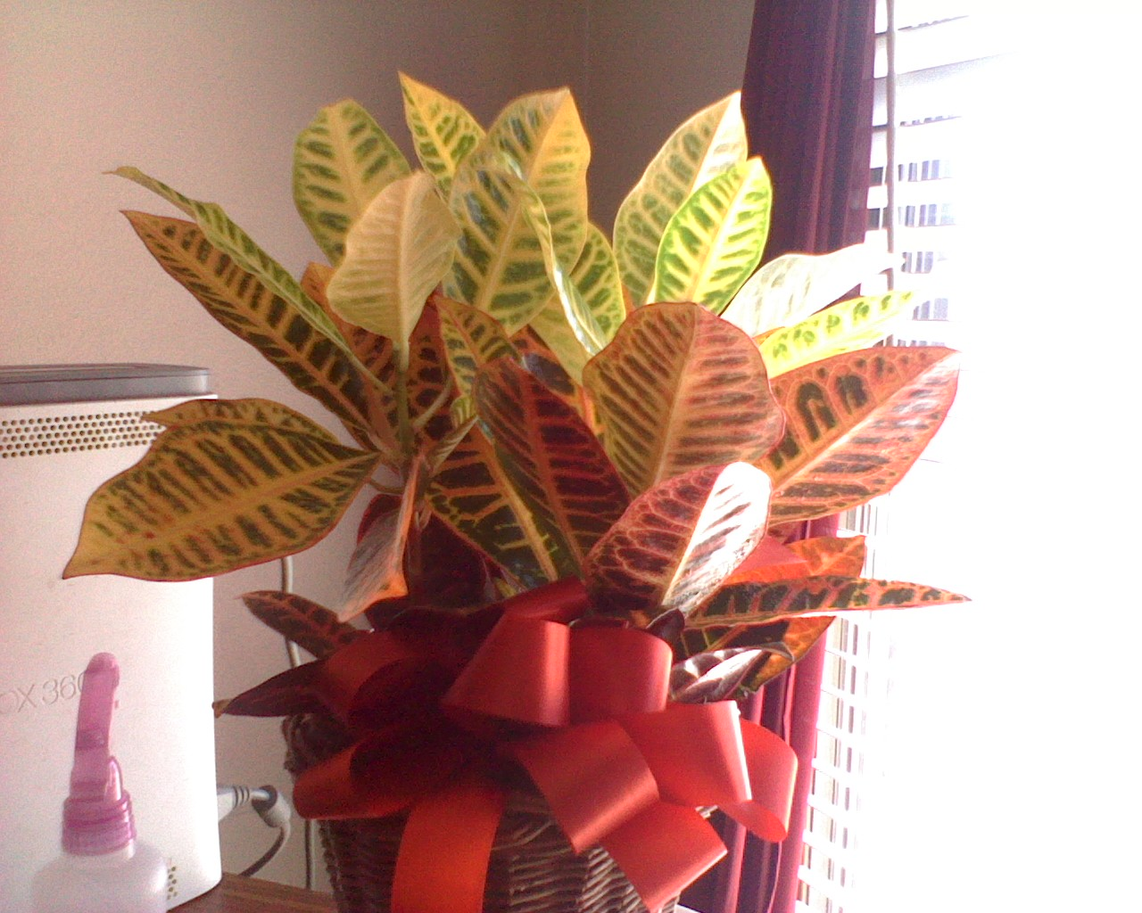 Help! What Kind of Plant Is This? on tropical house plant identification, flowering plant identification, succulent plant identification, indoor ivy plant identification,