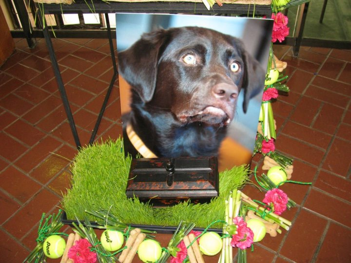 Dog Funeral Flowers