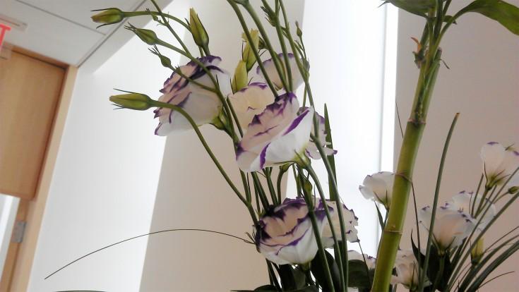 Purple Rim Lisianthus