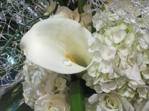 Diamond inside calla lily.