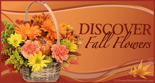 Discover Fall Through Flowers