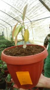 Plant #79 - ?