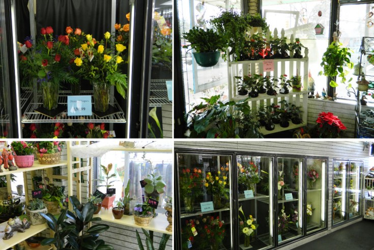 Houseplants & Flowers at Flowerama, Ft. Collins CO