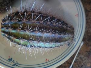 Cactus showing signs of root rot