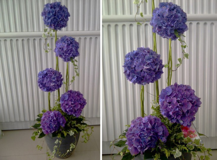 Hydrangea topiary by Julia Tadena in Abu Dhabi, UAE (One of our international florist friends.)