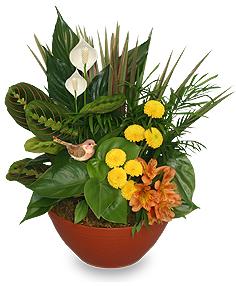 Garden Plant Dish
