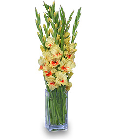 Gladiolus Arrangement