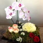 Fairy Garden Flowers by Adele-Rae Florist