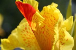 Petal Closeup