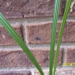 plant-seed-plams springs