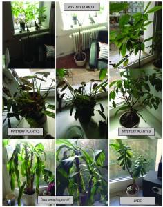 5 Mystery Plants