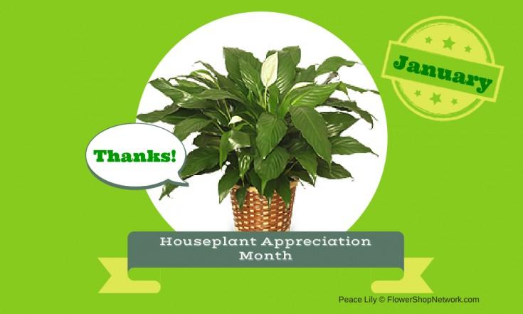 Houseplant Appreciation