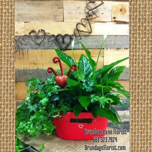 Brundage Lane Florist