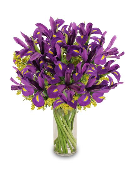 Purple Heart Iris
