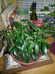uknown-plant