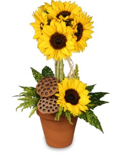 Pot O' Sunflowers