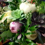 Succulents and peonies in a lush bridal bouquet from Frey Florist & Greenhouse in Providence, RI
