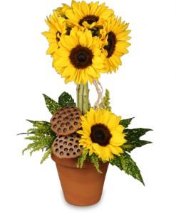 Pot O Sunflowers
