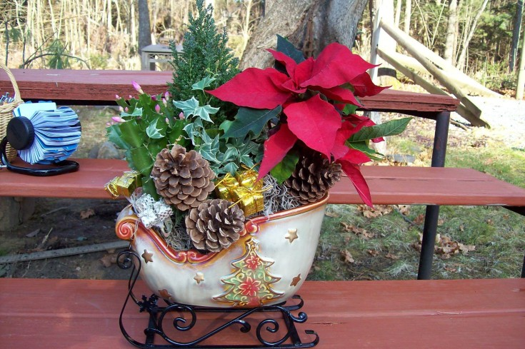Christmas cheer from Sweet Briar Flower Shop in Galway, NY