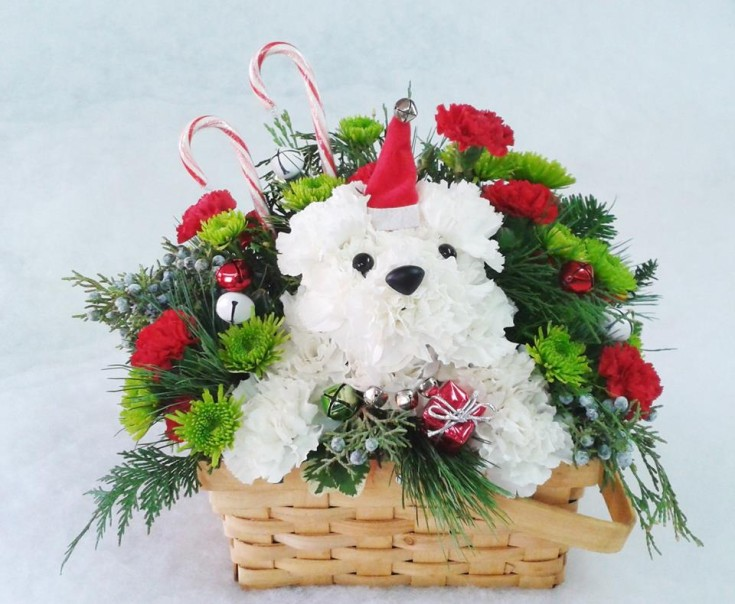 Jingle paws from Marshfield Blooms in Marshfield, MO