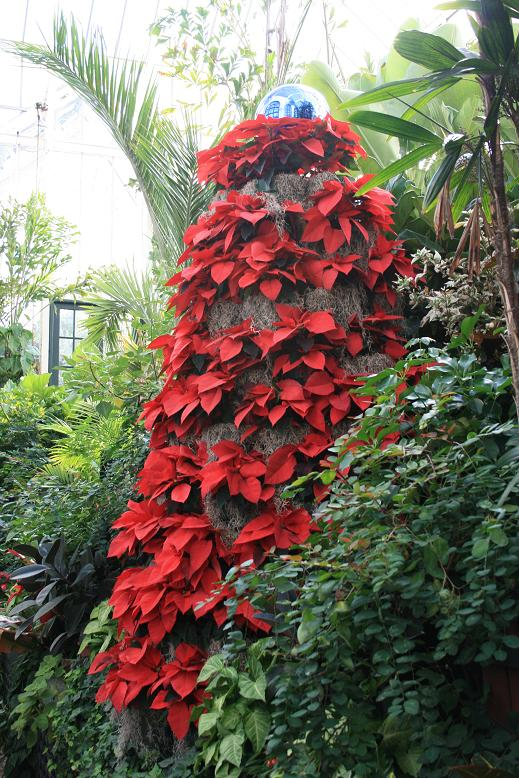 Poinsettia-topiary-Biltmore