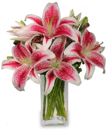 flower spotlight  stargazer lily, Natural flower