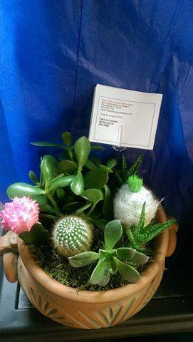 Cheerful Succulent dish from Front Porch Creations Florist in Crawfordville, FL