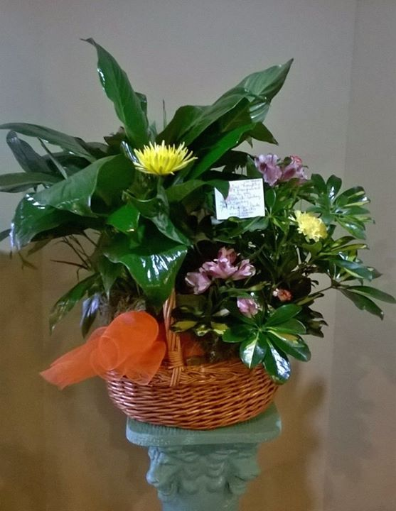Delightful plant arrangement by Wilma's Flowers in Jasper, AL