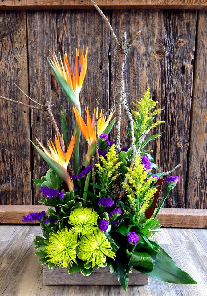 Tropical color from Petals in Thyme of Wasaga Beach, ON