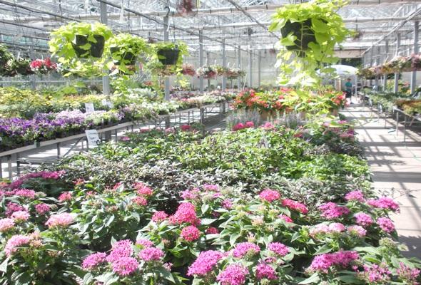 More Than A Flower Shop