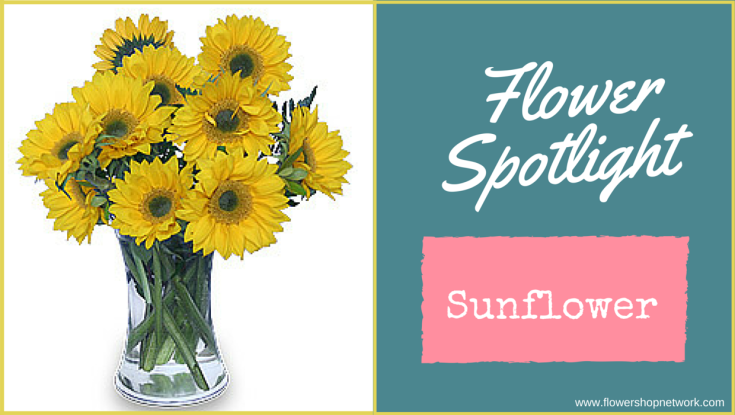 Flower Spotlight-Sunflower