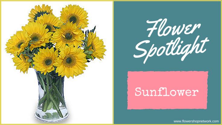 Flower Spotlight-Sunflower