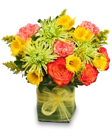 Spring floral arrangements you need if you love classic light pink roses then this is the right arrangement for you these flowers portray beauty elegance and grace mightylinksfo