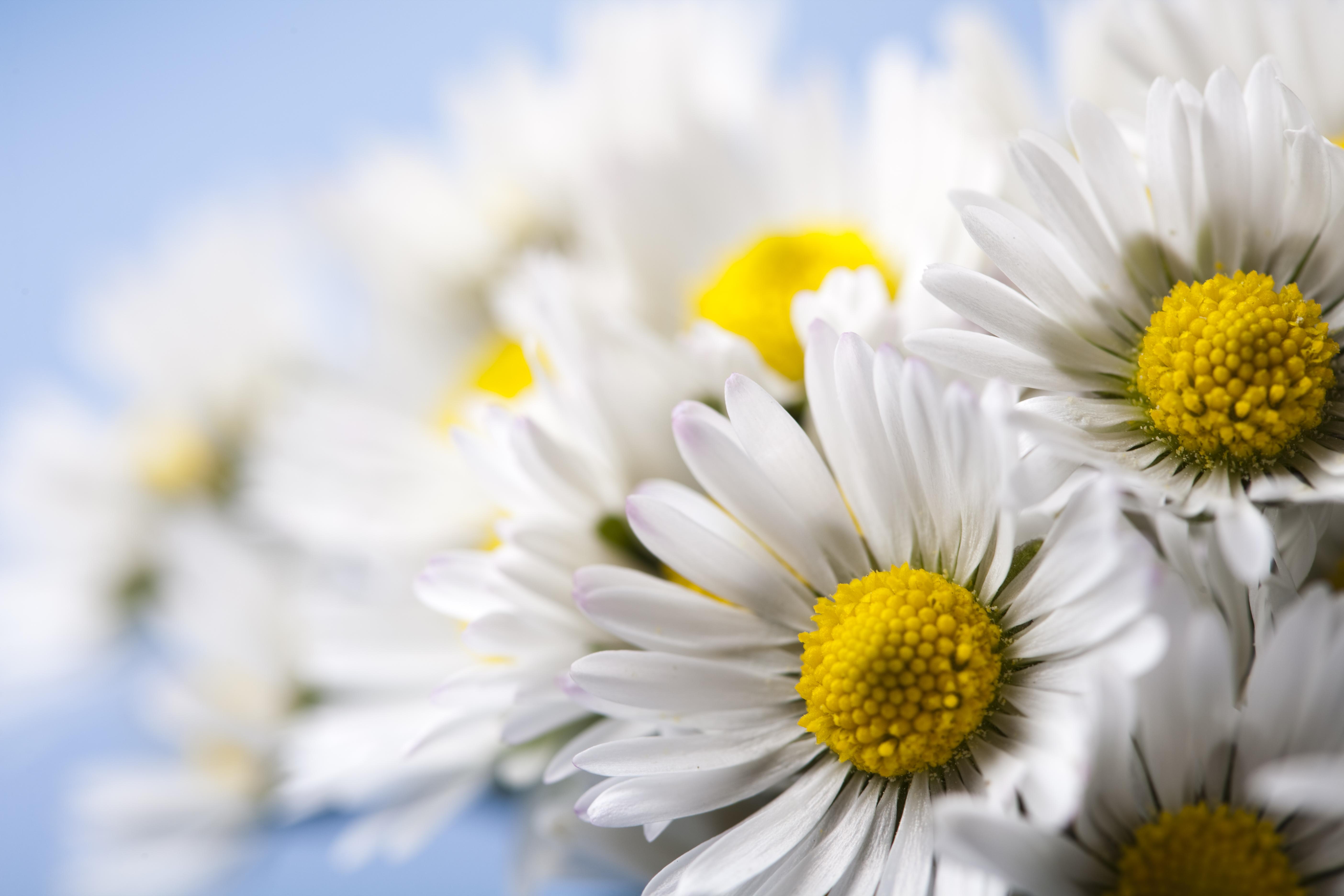 Find your birth month flower daisy flower springtime bright vivid theme izmirmasajfo