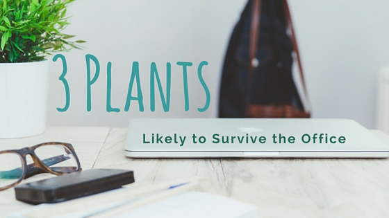 3 Plants Likely to Survive the Office