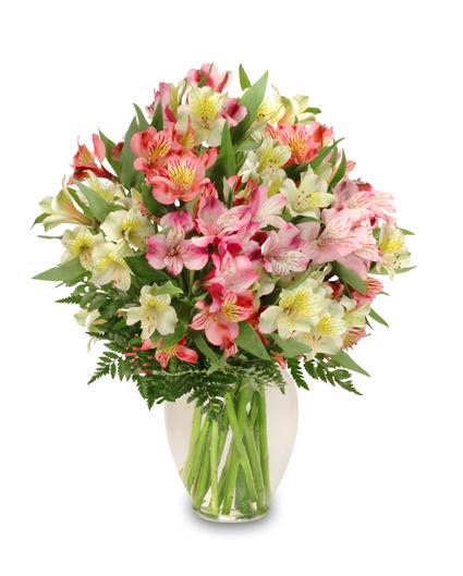 Alstroemeria   The Flower Expert - Flowers Encyclopedia