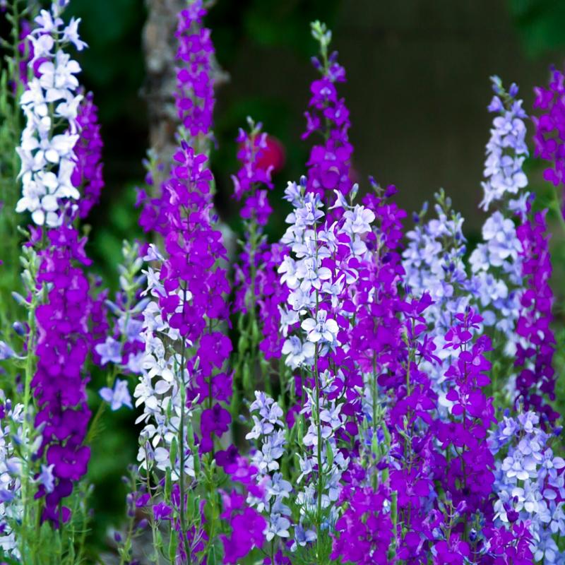 Fall Wedding Flowers List: What's Blooming Now? October Flowers In Season