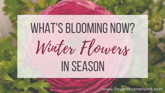 What 39 s blooming now winter flowers in season for Flowers in season now