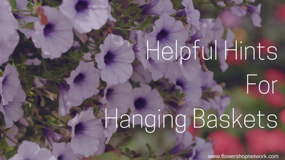 Helpful Hints For Hanging Baskets