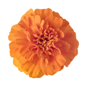 Orange Marigold Flower