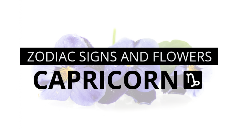 Zodiac Signs and Flowers