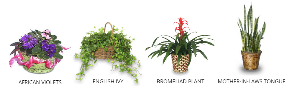Capricorn Plants